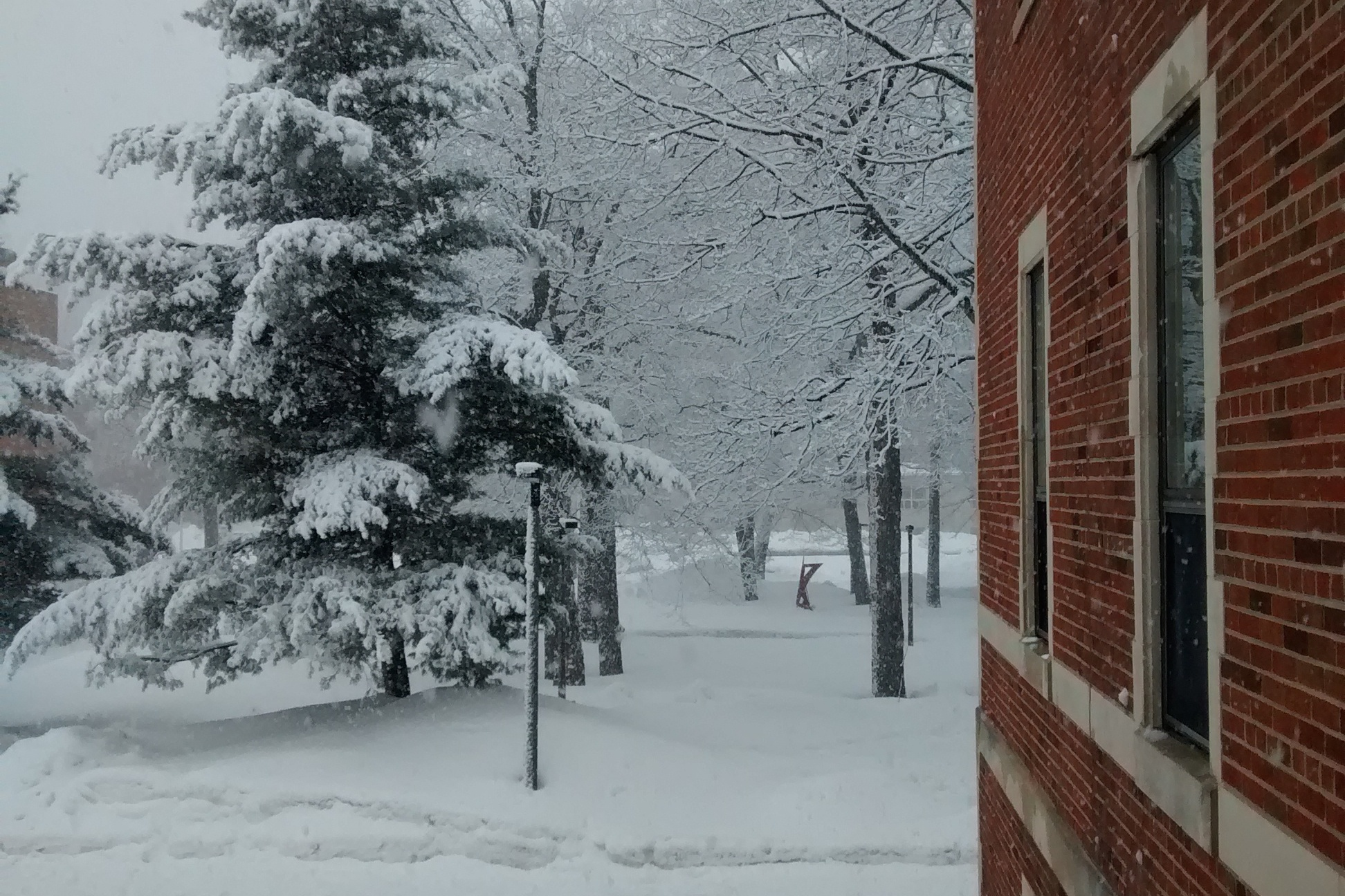 Snowy trees outside Douglass Houghton Hall