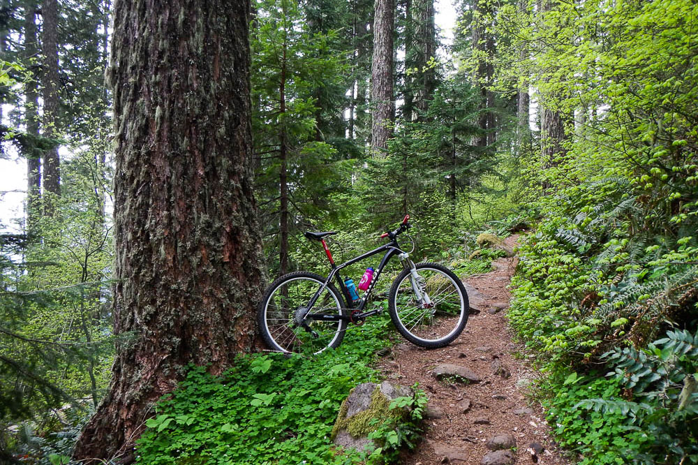 Mountain bike leaning on old growth tree